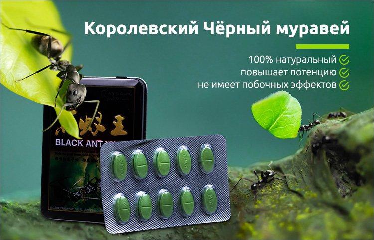 купить королевский чёрный муравей