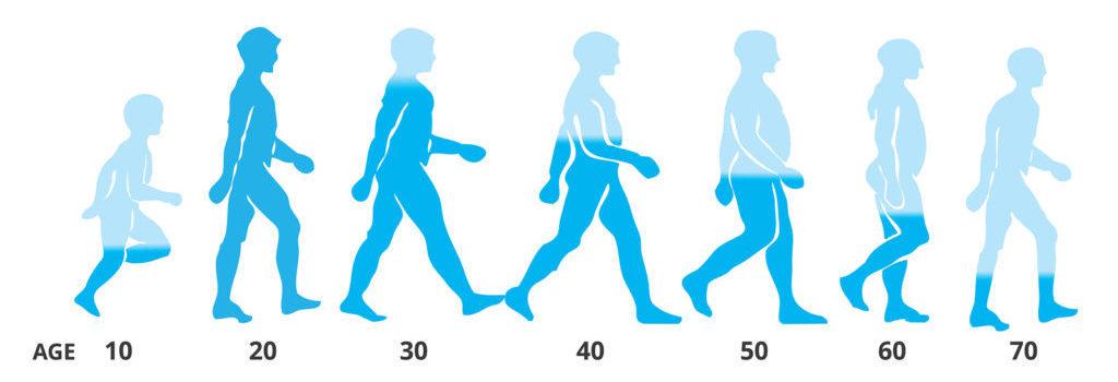 Уровень тестостерона в зависимости от возраста